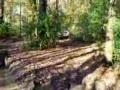 Chevy Truck Hits Tree